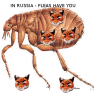 ticer-fleas-have-you
