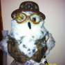 Benny the owl 1